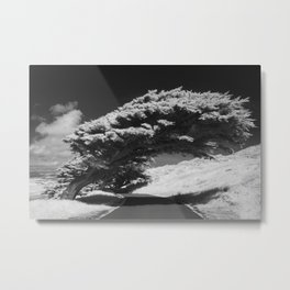 Bending Cypress Black and White Photographic Picture Metal Print