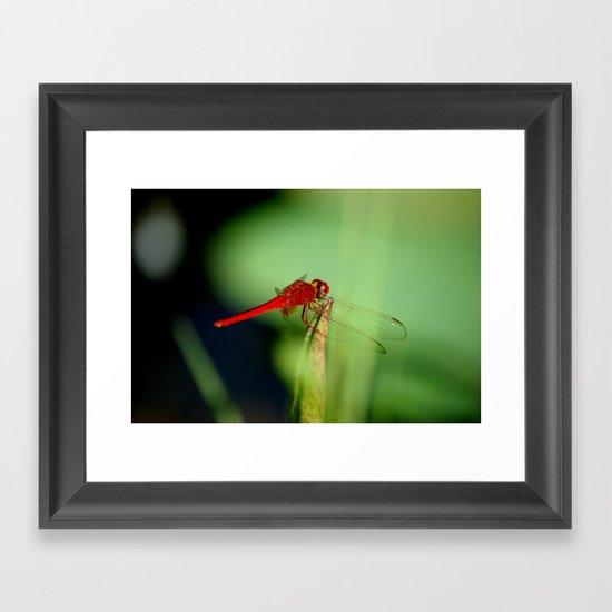 Red Dragonfly Framed Art Print