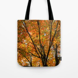 Colorful Maple of New England. Tote Bag