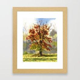 Beech Tree, Oct 24th  Framed Art Print