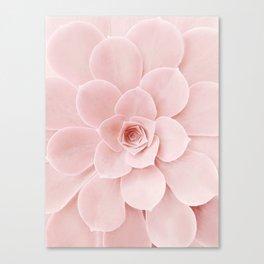 Blush Succulent Canvas Print