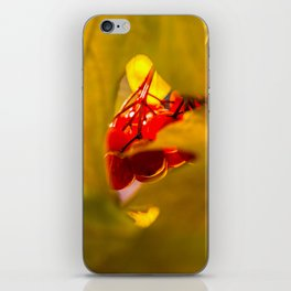 Autumn Fruits - Squashberry iPhone Skin