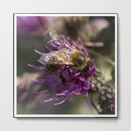 Bee on thistle Metal Print