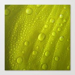 water drops petal IV Canvas Print