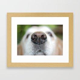 Sniff Framed Art Print
