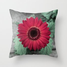 A Full Frontal Closeup of a Red Daisy Throw Pillow