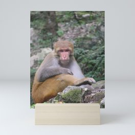 INDIA - Monkey on a Hike Mini Art Print