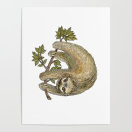Sloth on a Branch Poster