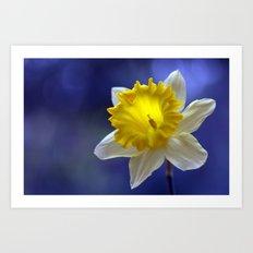 Daffodil in blue 9854 Art Print