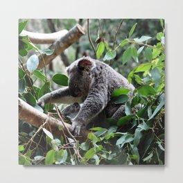 Koala bear Mom and her baby  Metal Print