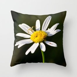 Tiny Daisy And Crab Spider Throw Pillow