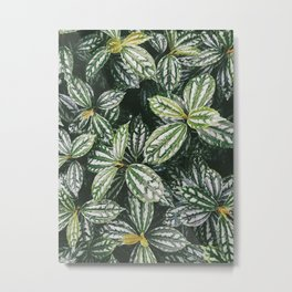 Plantae VII Metal Print