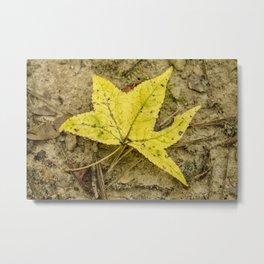 The Yellow Leaf Metal Print