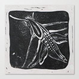 The Hummingbird Moth Canvas Print