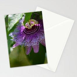 Maypop Stationery Cards