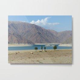 Camels in front of Orto Tokoy reservoir in Kyrgyzstan Metal Print