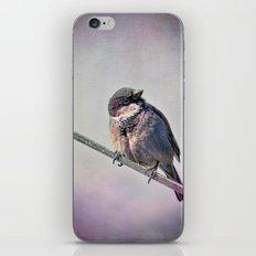 A New York City Sparrow iPhone & iPod Skin