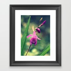 Purple Frilly Orchid Framed Art Print