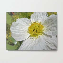 white poppy bloom XIX Metal Print