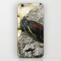 tortoise iPhone & iPod Skins featuring Tortoise by Liya Perfidious