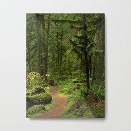 The Deep Woodland  Path... Metal Print