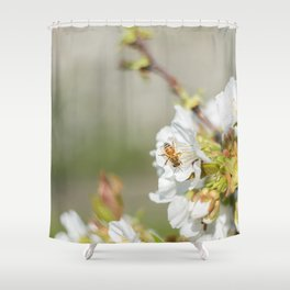 Bee laid on white flowers of a cherry tree Shower Curtain