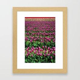 Sea of Tulips Framed Art Print