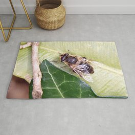 Drone or Hover Fly Rug