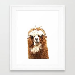 Alpaca Portrait Framed Art Print