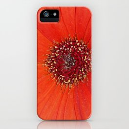 Orange Gerbera daisy iPhone Case