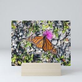 MONARCH BUTTERFLY ON FLOWER Mini Art Print