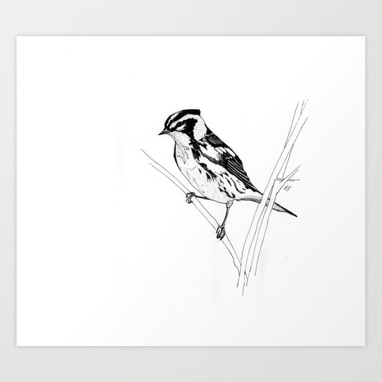 Blackburnian Warbler Study Art Print