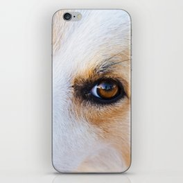 Portrait of a lovely stray dog iPhone Skin