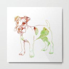 Jack Russel Terrier Metal Print