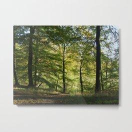 Beech Forest  Metal Print