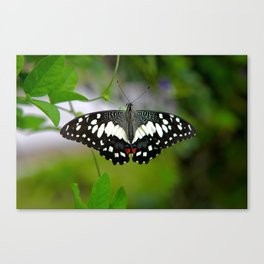 Butterfly Large Canvas Print