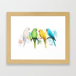 Indian Ringneck Parrots Framed Art Print