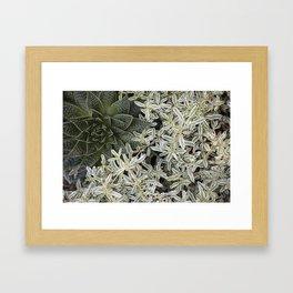 Silver Succulents Framed Art Print
