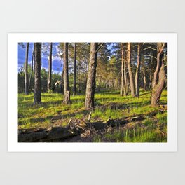 Dreaming Pine Trees in the Evening Light  Art Print
