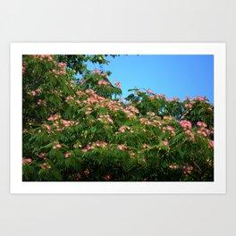 Mimosa Branch Art Print
