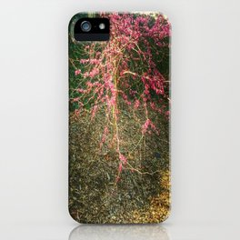 Chinese Red Bud  iPhone Case