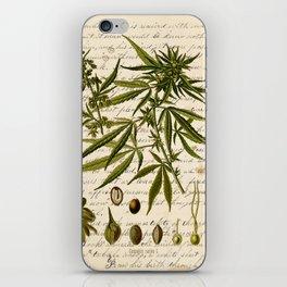 Marijuana Cannabis Botanical on Antique Journal Page iPhone Skin