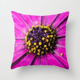 Dimorphotheca Throw Pillow