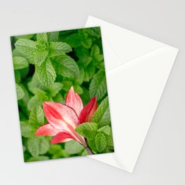 Lily and Mint Stationery Cards