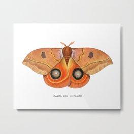Randa's Eyed Silkmoth (Automeris randa) Metal Print