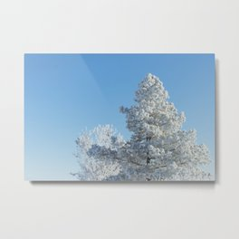 Frosted Tree Metal Print