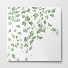 Golden Pothos - Ivy Metal Print
