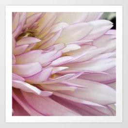 Dahlia  petals Art Print