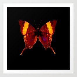 Butterfly - Vibrant Glow - Orange Brown Yellow Black Art Print