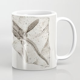 Comatula Mediterranea illustrated by Charles Dessalines D Orbigny (1806-1876) Coffee Mug
